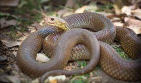 serpent-bmp